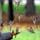 Gorriones (3) La señora de los gorriones