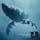Ballenas (5) Sea Shepherd, batallar por las ballenas