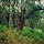 Bosques (4) Los bosques de siempre