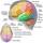 El cerebro automático
