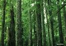 Bosques (3) 2011, Año Internacional de los Bosques