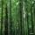 Bosques (7) La lenta belleza de las plantas