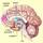 Cerebro y placer